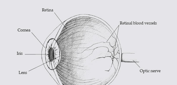 diagram-eyeball-slider - retina vs iris - biometrics